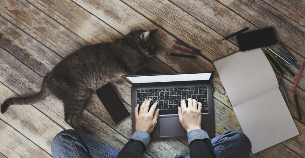 SolDevelo- remote working cat